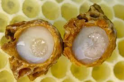 WHAT IS ROYAL JELLY?